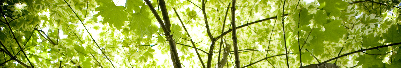 Green Tree Canopy Environmental Activities
